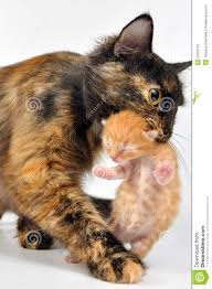 mother cat carrying newborn kitten stock photos image 21033723