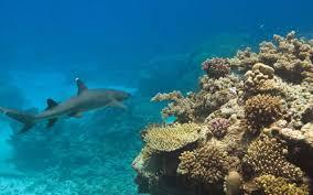 marine creatures sls beachsafe