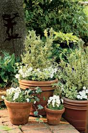 Patio Plants For Sun Heat Tolerant Container Gardens For Sweltering Summers Southern