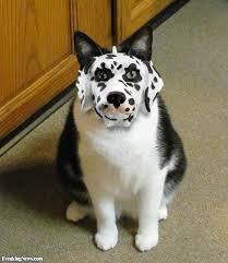Funny Halloween Animal Costumes Halloween Animal Costumes Pictures Gallery Freaking