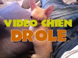 betisier cuisine betisier animaux vidéo chien drole chiwawa drole