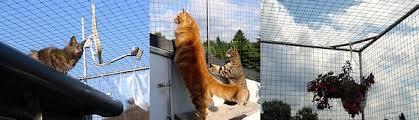 katzenschutz balkon balkon und fenster für katzen sichern katzen haltung katzen