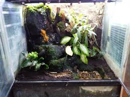 second hand exo terra vivariums reptiles rehome buy and sell in