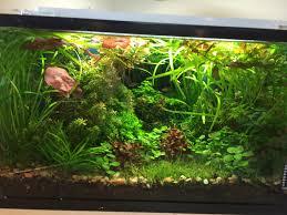 10 gallon planted tank led lighting planted aquarium light aquarium article digest