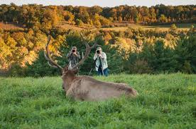 Pennsylvania Wildlife images Pennsylvania elk photography experience bob shank photography jpg