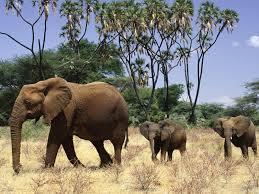 aov wallpaper elephant desktop wallpaper wallpapers browse