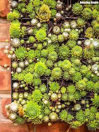 succulents wall garden decor youtube