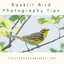 best canon sx50 settings for bird photography the afternoon birder