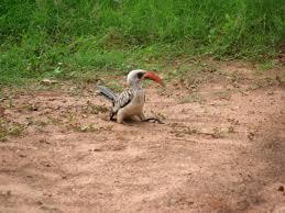 δ photographic field guide to the common birds of the gambia