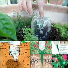 Small Kitchen Garden Ideas Makeovers And Decoration For Modern Homes Small Vegetable Garden