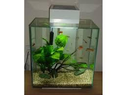 31 best fluval edge aquarium images on aquarium fish