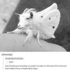 Moth Meme - the best moth memes memedroid