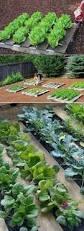 52 best kert images on pinterest gardening vegetable garden and