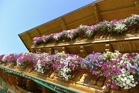 balkon blumen wunderschöne balkonblumen bild stallerhof bed breakfast