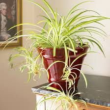 common house plants my mom her plants page 4 of 8 four