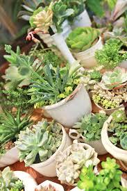 succulent centerpieces diy