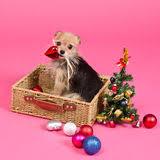 dog and christmas tree stock vector image of sitting 34937156