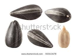 collection black sunflower seeds isolated on stock photo 553113478