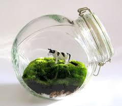 creative glass terrarium containers u2013 outdoor decorations