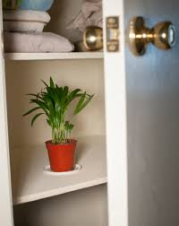 Indoor Plants That Don T Need Sun Can Plants Grow Without Sunlight Or Water Science Project