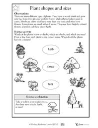 18 best images of first grade science plant worksheet printable