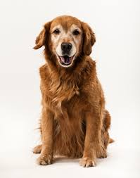 end of life considerations for your pet