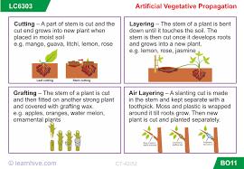Vegetative Propagation By Roots - artificial vegetative propagation b
