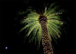 palm tree christmas lights funny christmas lights card and decore