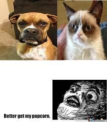 Grumpy Dog Meme - grumpy dog vs grumpy cat by pokymon92 meme center