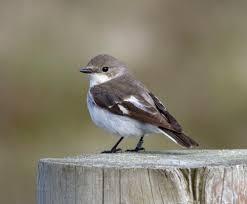 june 2013 birding frontiers page 2