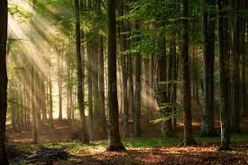 autumn forest trees nature green wood sunlight backgrounds stock
