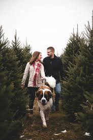 ciogiart lifestyle photography saint bernard couple christmas