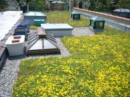 7 ways cities are transforming urban rooftops curbed