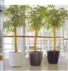 jersey indoor plants