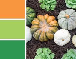 fall color palette orange green heirloom pumpkins merriment