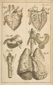 vintage halloween illustrations 236 best vintage medical illustrations images on pinterest human