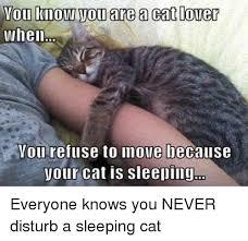 Sleeping Cat Meme - 25 best memes about sleeping cats sleeping cats memes