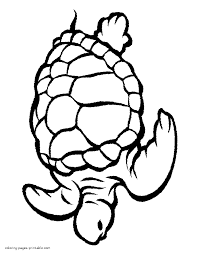 coloring page turtle sea and ocean animals coloring pages