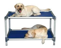 does cvs sell dog beds memory foam large bed o u2013 ru site