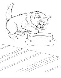 printable kids coloring pages free printable kitten coloring pages for kids best coloring