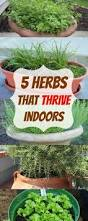 Herbs Indoors 5 Herbs That Thrive Indoors Plant Instructions