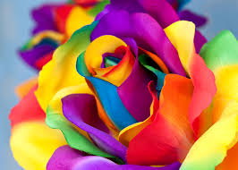 multicolor roses images multicolor roses flowers macro photography closeup
