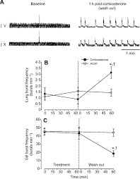 corticosterone promotes emergence of fictive air breathing in
