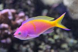 pictures of fish qygjxz