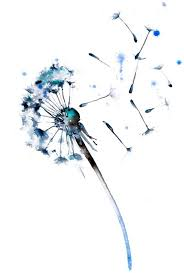 watercolor watercolor dandelion search