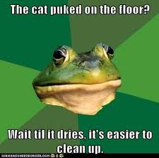 Gross It S Friday Memes - animal memes foul bachelor frog dry cleaning i can has cheezburger