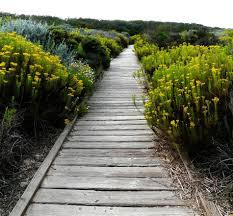 coastal native plants california coastal strand plant community