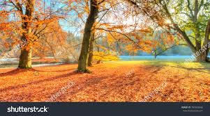 beautiful colored trees autumn landscape photography stock photo