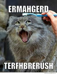 Ermahgerd Memes - 20 derpiest ermahgerds smosh