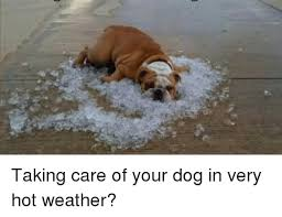 Hot Weather Meme - taking care of your dog in very hot weather meme on ballmemes com